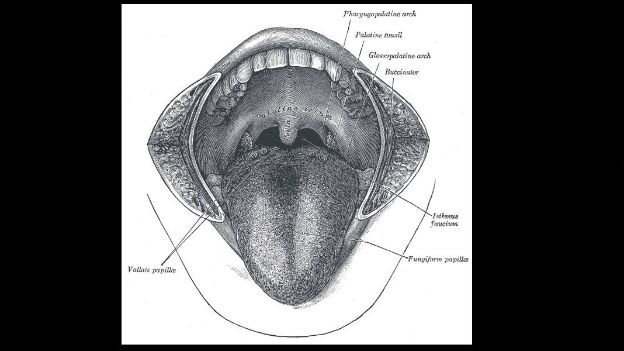 Unheimlich: Die Zunge als Transplantationsobjekt.