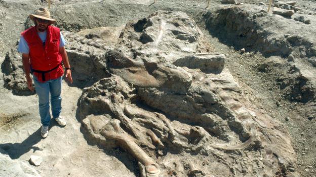 War bis vier Meter hoch: Tyrannosaurus Rex.