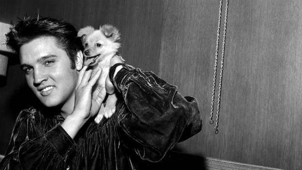Einer der erfolgreichsten Künstler: Elvis Presley.