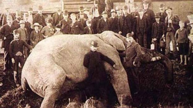 Jumbo liegt tot auf dem Boden, umringt von Schaulustigen, es ist ein vergilbtes Schwarzweiss-Foto (15. September 1885).