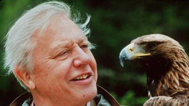 In seinem Element: David Attenborough mit einem Adler