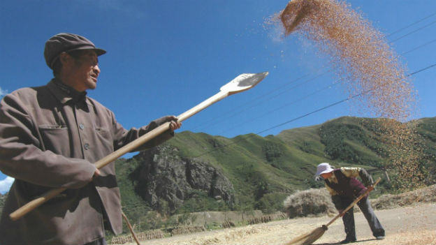 Bauern im Nordwesten Chinas bei der Ernte 2004.