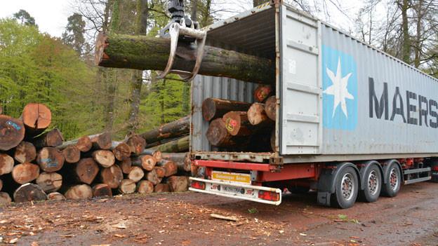 Holzerarbeiten in einem Wald in der Schweiz.