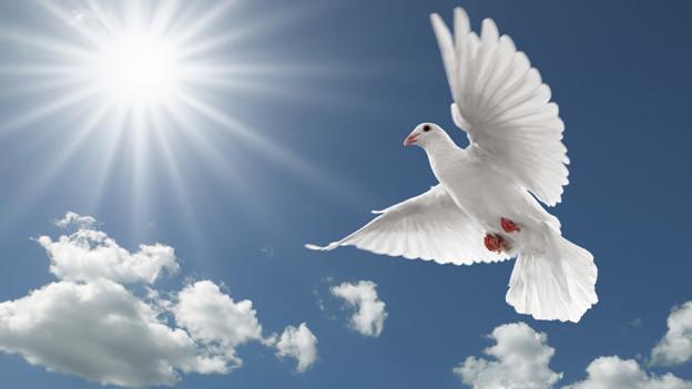 Die kommende Woche bietet gute Voraussetzungen für Friedensangebote.