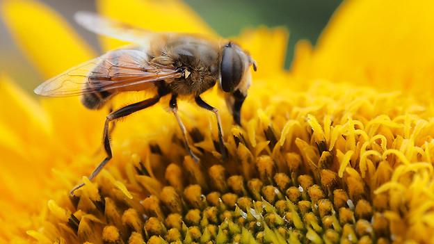 Fleissig wie die Bienen: Effizienz und Intuition lassen uns produktiv zur Tat schreiten.