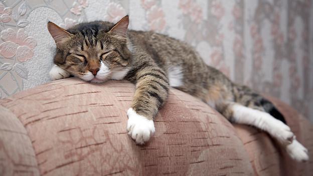 Es einer Katze gleichtun: Ein gemütliches Plätzchen suchen, sich abmelden und die Seele baumeln lassen.