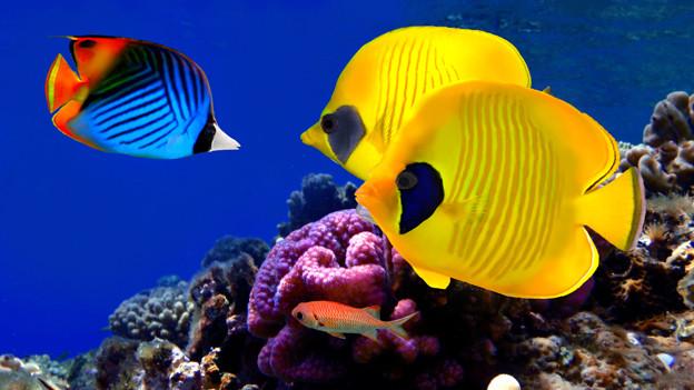Im Wasser fühlt sich ein Fisch in seinem Element.