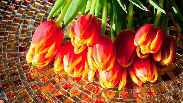 Tulpen fürs Mami zum Muttertag.