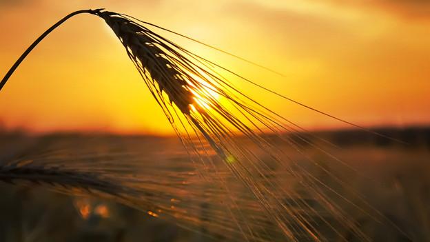 Sommerzeit: Zeit der Ernte.