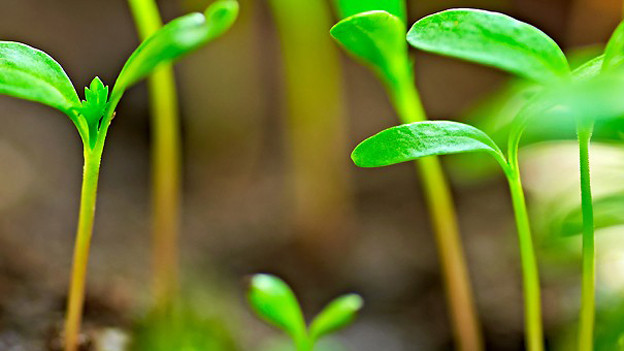 Kräuter, Gemüse und Salate aus Samen ziehen.