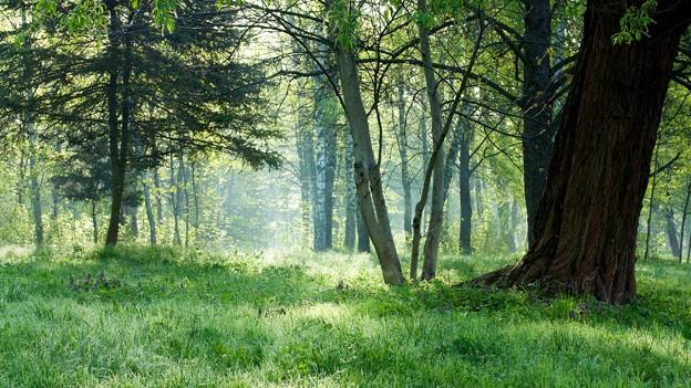 Sogenannte «Friedwälder» gibt es viele in der Schweiz: Speziell für die Naturbestattung ausgeschiedene Waldstücke.