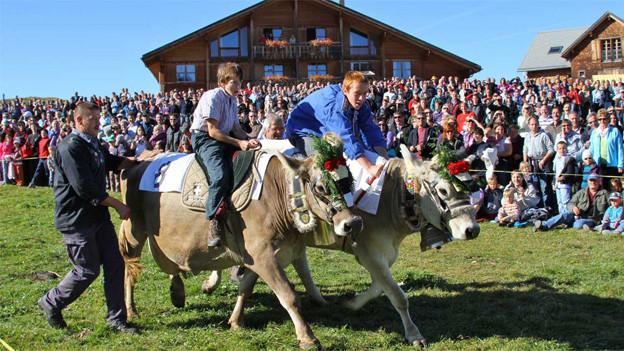 Beim Kuhrennen setzt man im Wettbüro für einmal nicht auf das schnellste Pferd, sondern auf die beste Kuh.