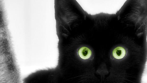 Auch eine schwarze Katze musste beim Kartenspiel bisweilen als «Schwarzer Peter» hinhalten.