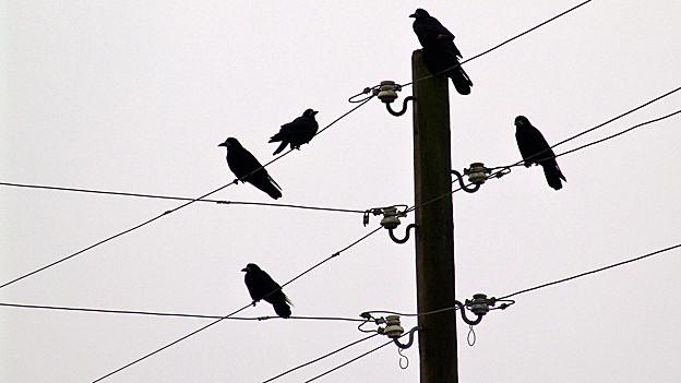 Vögel spüren genau, wo es sicher ist sich niederzusetzen und wo nicht.