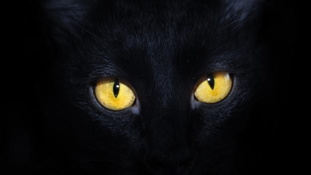 Die Redensart «Die Katze aus dem Sack lassen» ist in vielen Ländern gebräuchlich.