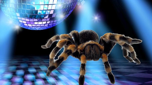 Stroboskopblitze wie in der Disco werden von Spinnen nicht wahrgenommen