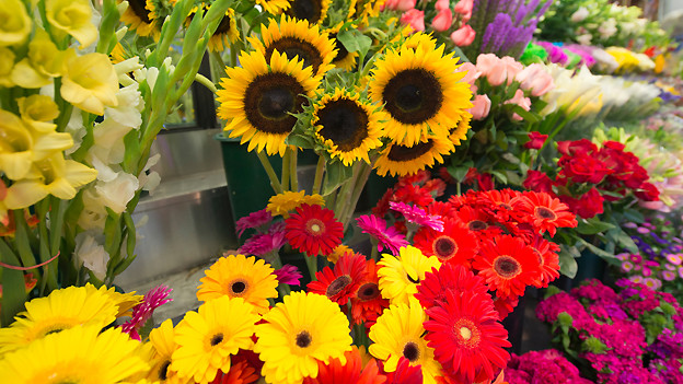 Zum Weltfrauentag vom 8. März laufen in Russland die Blumengeschäfte gut.