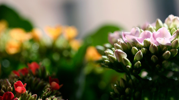 Im Sprachgarten wächst eine bunte Vielfalt verschiedenster Blüten, doch manchmal setzt sich auch Unkraut fest.