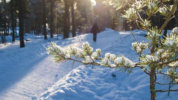 Skifahren oder spazieren im Skigebiet, davon träumt Christa für die Weihnachtstage.