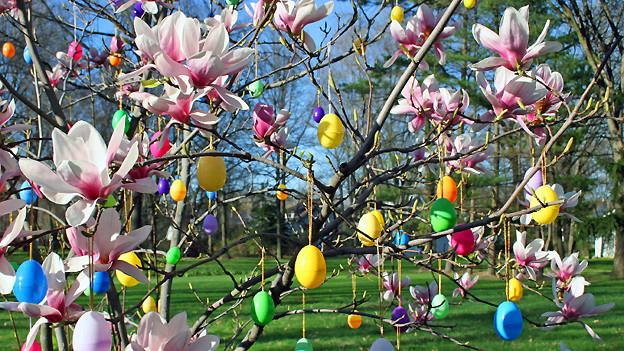 An den Zweigen einer Magnolie hänge ganz viele verschieden farbige Eier.