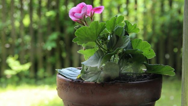 Kalk bildet sich leicht am Rand von Blumentöpfen.