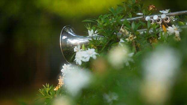 Trompete hinter einem blühenden Strauch.