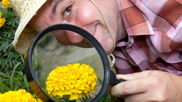 Ein Mann mit Gartenhut und Lupe prüft eine gelbe Blume.