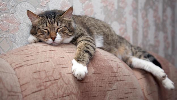 Eine Katze liegt auf der Rückenlehne eines Stoff-Sofas.