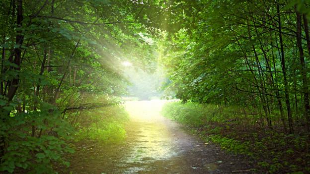 Ein von der Sonne gefluteter Waldweg.