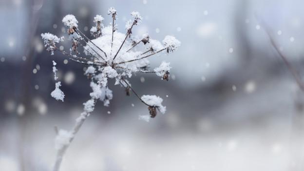 Winterlandschaft mit einer Pflanze, an deren Zweigen kleine Schneeflocken glitzern.