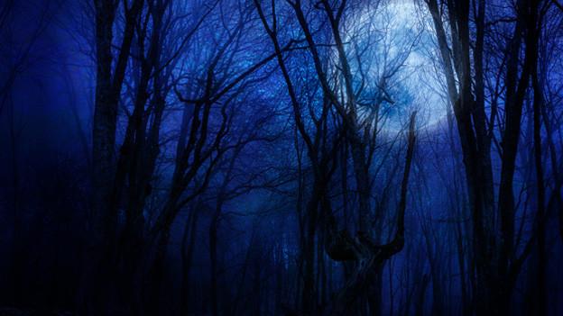 Vollmond in tiefblauer Nach über kahlen Baumwipfeln.
