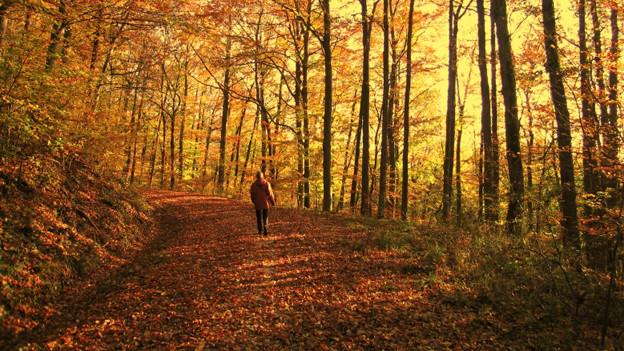Eine Frau mit roter Jacke läuft durch den goldbraunen Herbstwald.