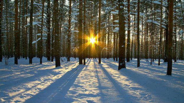 Die Wintersonne ist gut für das Gemüt, für die Vitamin D-Produktion reicht sie jedoch nicht.