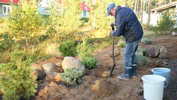Senior gräbt Loch in Garten.