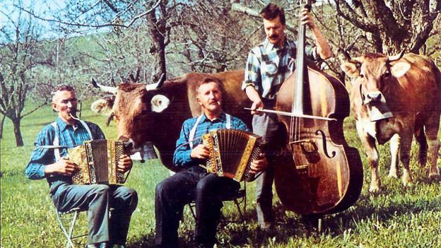 Drei Männer, Volksmusikanten, zwei Bässe, ein Schwyzerörgeli und im Hintergrund Kühe.
