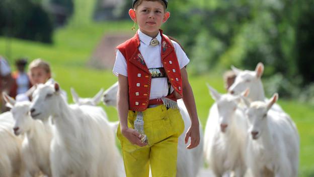 Appenzeller Geissbueb mit seiner Herde in Appenzeller Tracht mit knallgelben Hosen vor einer Herde weisser Ziegen.
