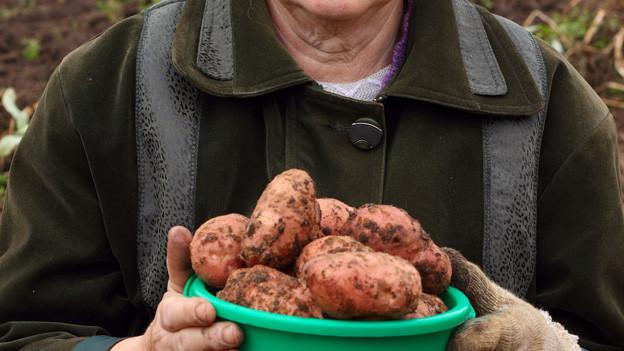 Ältere Frau mit Eimer voller Kartoffeln.
