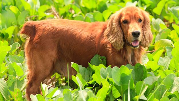 Ein Hund inmitten einer saftig grünen Wiese.