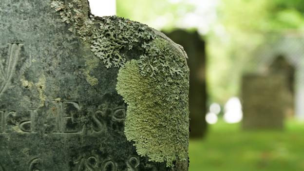 Alter Grabstein mit Moos überzogen.