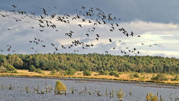 Vogelschwarm über See.