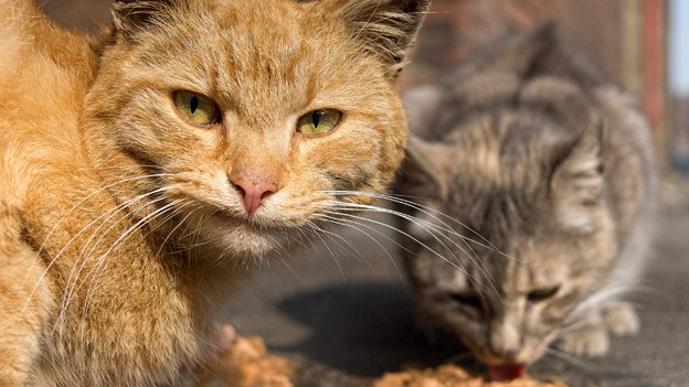 Kleine Katze leckt etwas am Boden ab, grosse Katze steht davor und schaut etwas angeekelt.