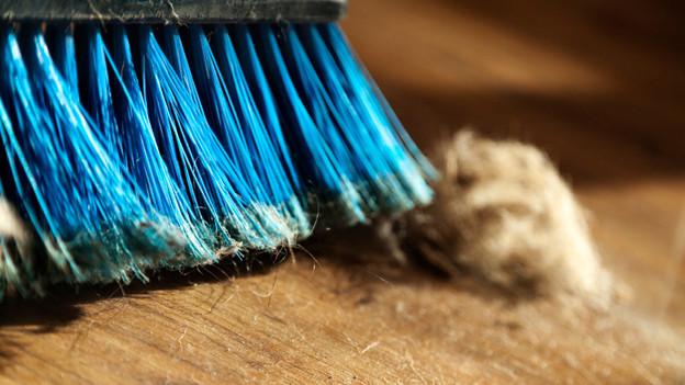 Blaue Borsten eines Besens, mit dem eine Wollmaus weggewischt wird.