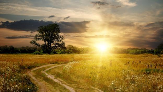 Über einer wild überwachsenen Landschaft geht die Sonne auf.