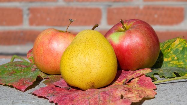 Stillleben mit zwei Äpfeln und einer Birne.