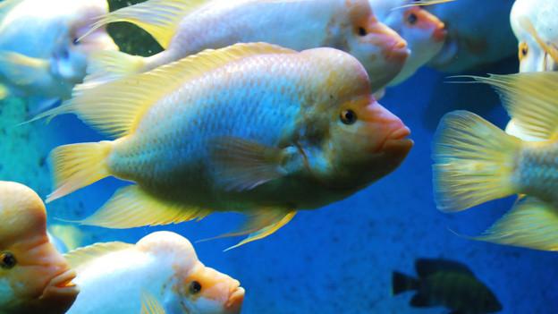 Ein Schwarm bunter Salzwasserfische.