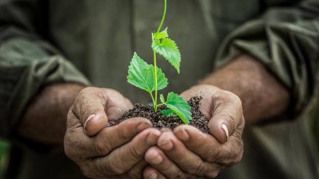 Zwei dunkle Hände halten ein Stück Erde, in der eine zarte grüne Pflanze wächst.