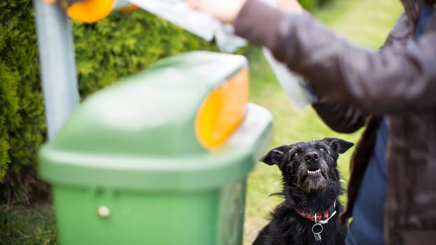 Ein Hund sitzt vor einer grünen Sammelbox für Hundekotbeutel.