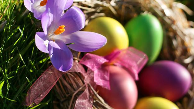 Verschieden farbige Eier.