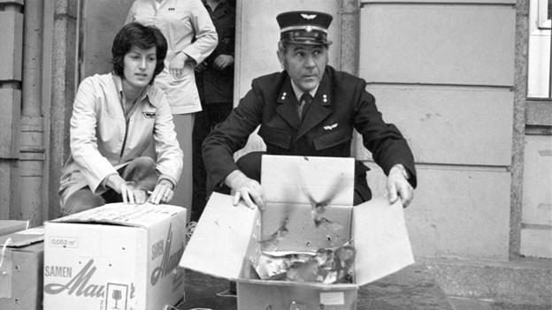 Eine Frau und ein Mann öffnen Kartonschachtel, damit die darin transportierten Schwalben in die Freiheit fliegen können..