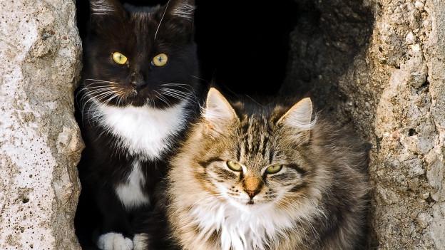Schwarzweisse und Tigerkatze in einem Erdloch.